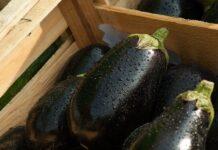 Mallorca Bimby-style stuffed eggplants